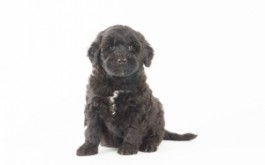 Fredrika & Buster's son Archer Diggory of Ottawa, ON at 6 wks