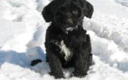Cadela & Levi's son Teddy Bear born 11/28/11, 8 weeks