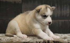 Mika at 4.5 weeks