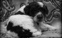 Bay & Rum's son River Murray of Enderby, British Columbia at 3.5 wks