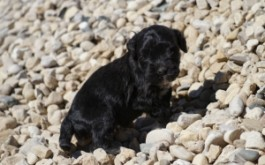 Oreo & Rum's son Spencer of Sarnia, ON at 4 weeks
